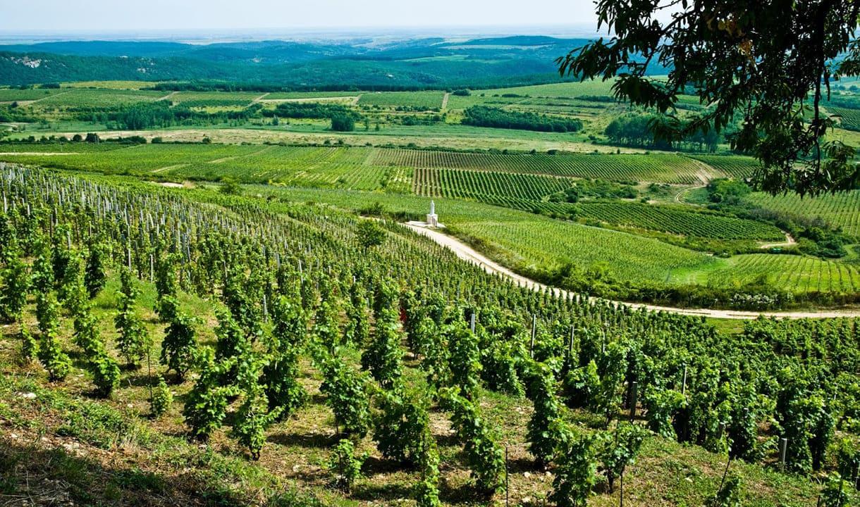 Paysage viticole d'Eger