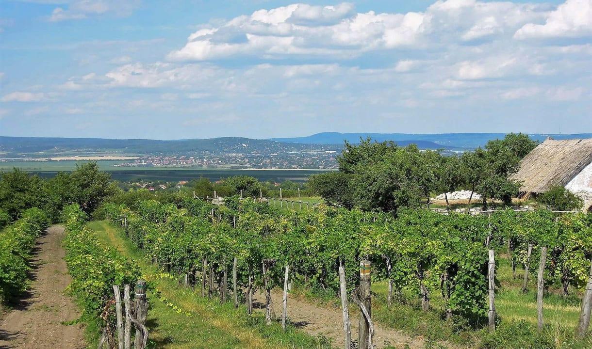 Paysage viticole d'Etyek