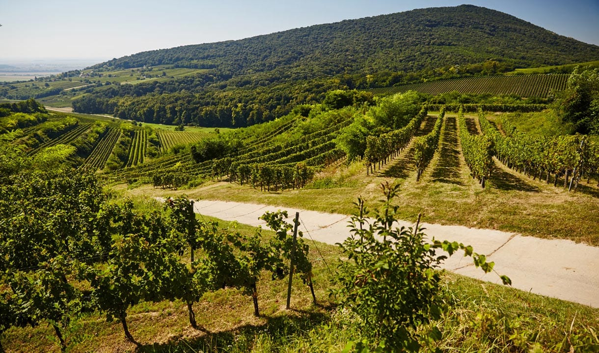 Paysage viticole de Villány