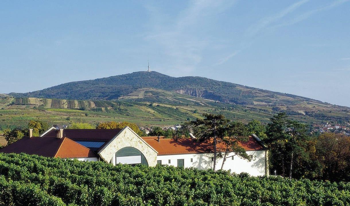 Piémont de Tokaj